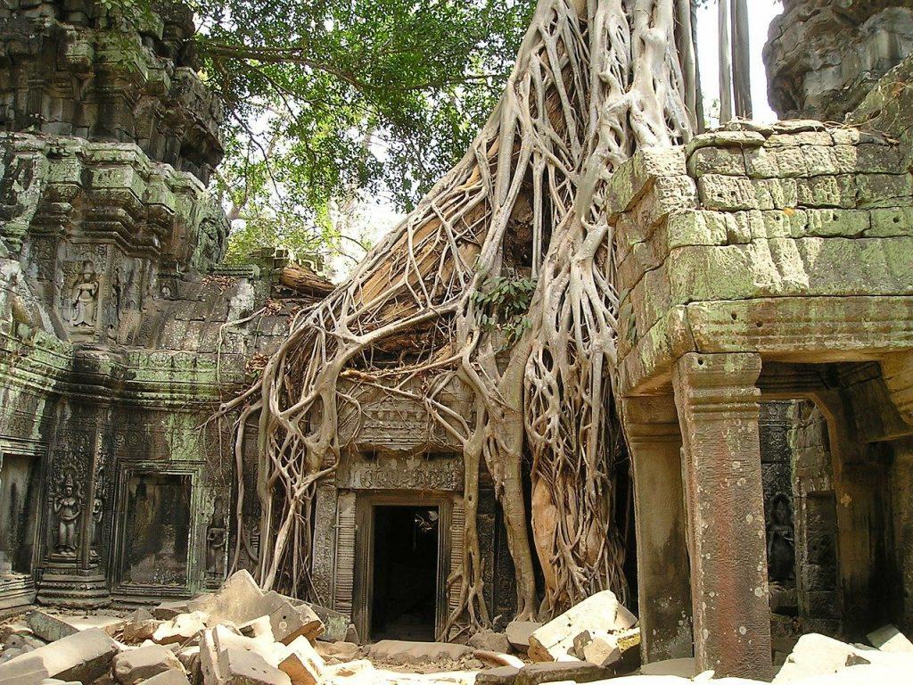 angkor wat temple roots