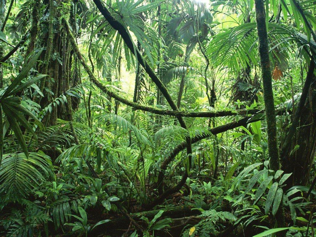 Amazon-Rainforest-1