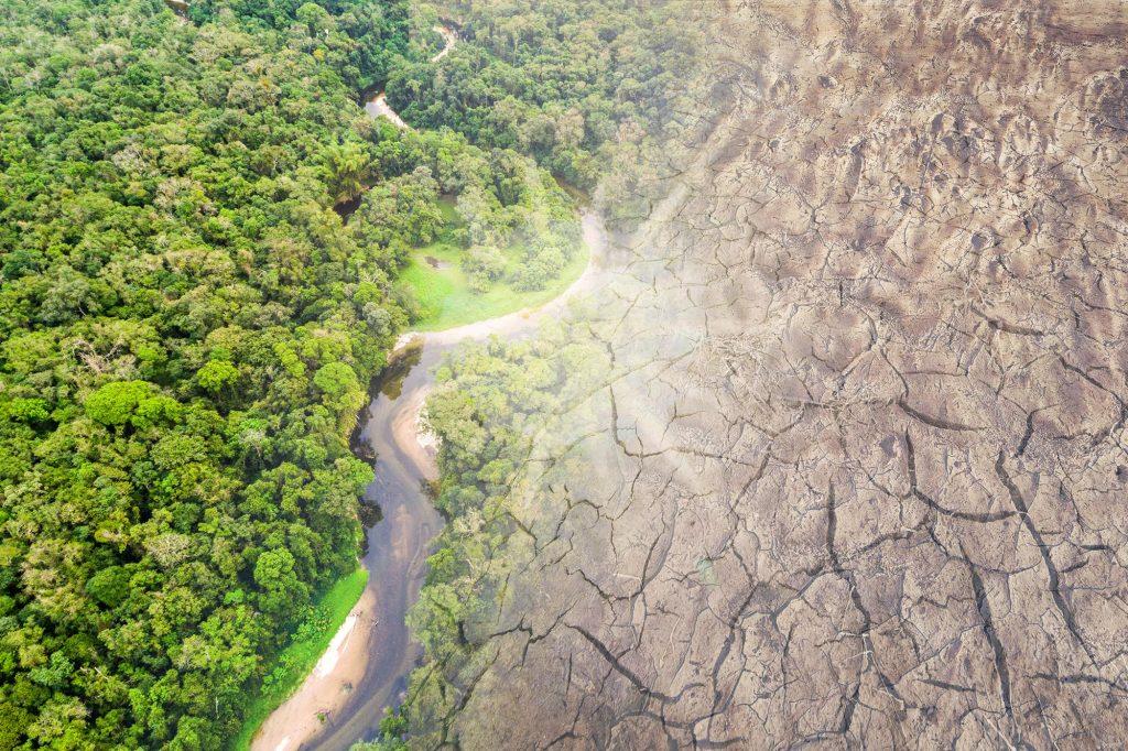 Amazon-Rainforest-Disappearing