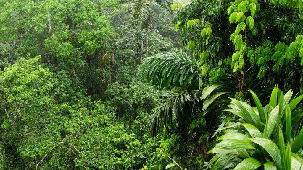 Amazon rainforest Image