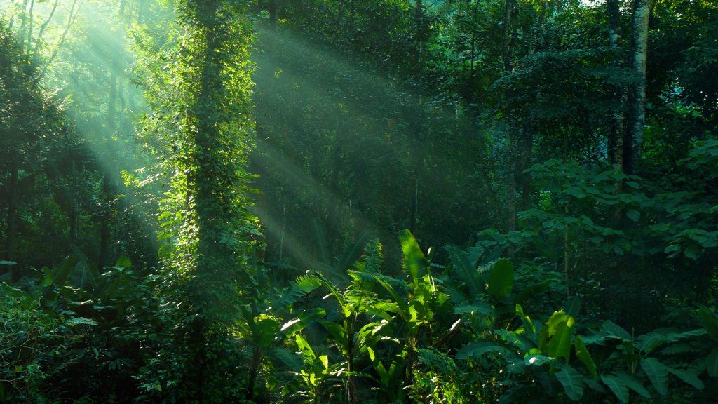 Amazon rainforest Pic