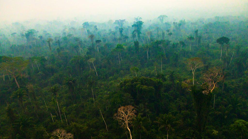 Amazon rainforest View