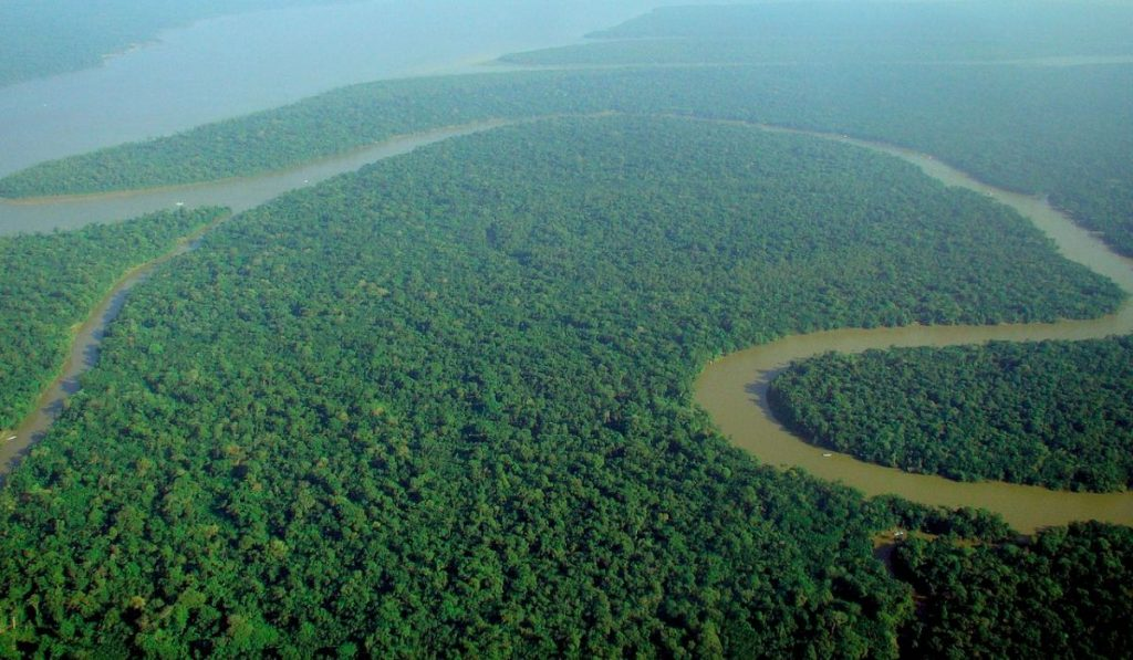 Amazon rainforest real view