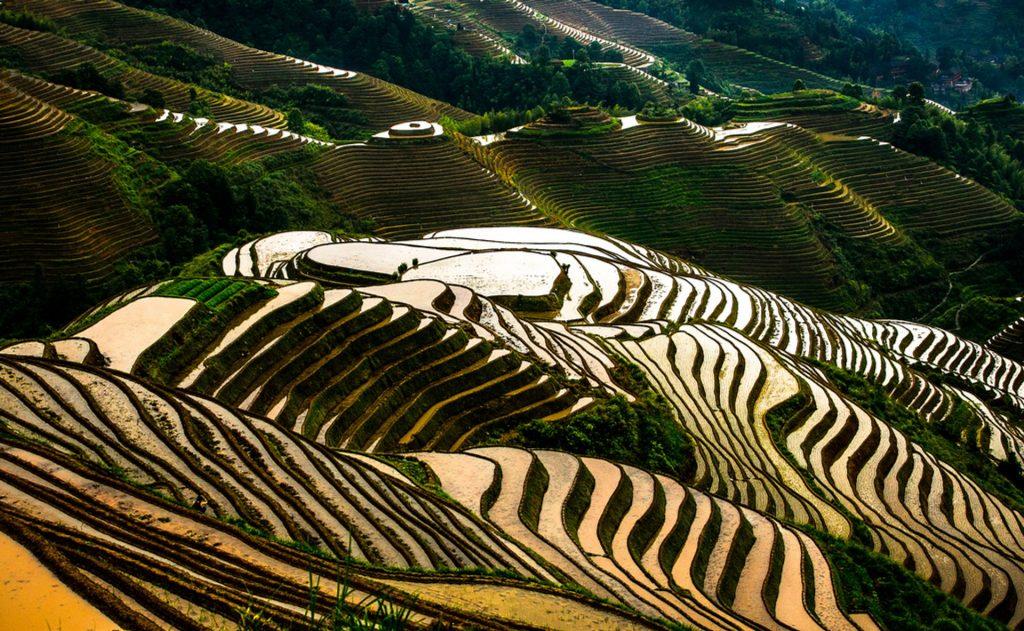 Longji Rice Terraces In China