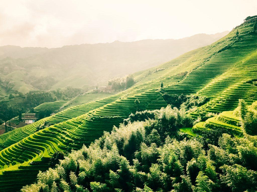 Longji Rice Terraces In China Pic