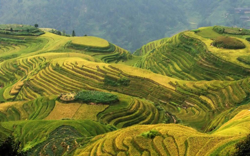 Longji Rice Terraces In China View