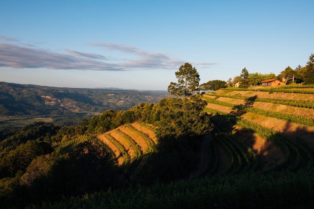 Napa Valley Image